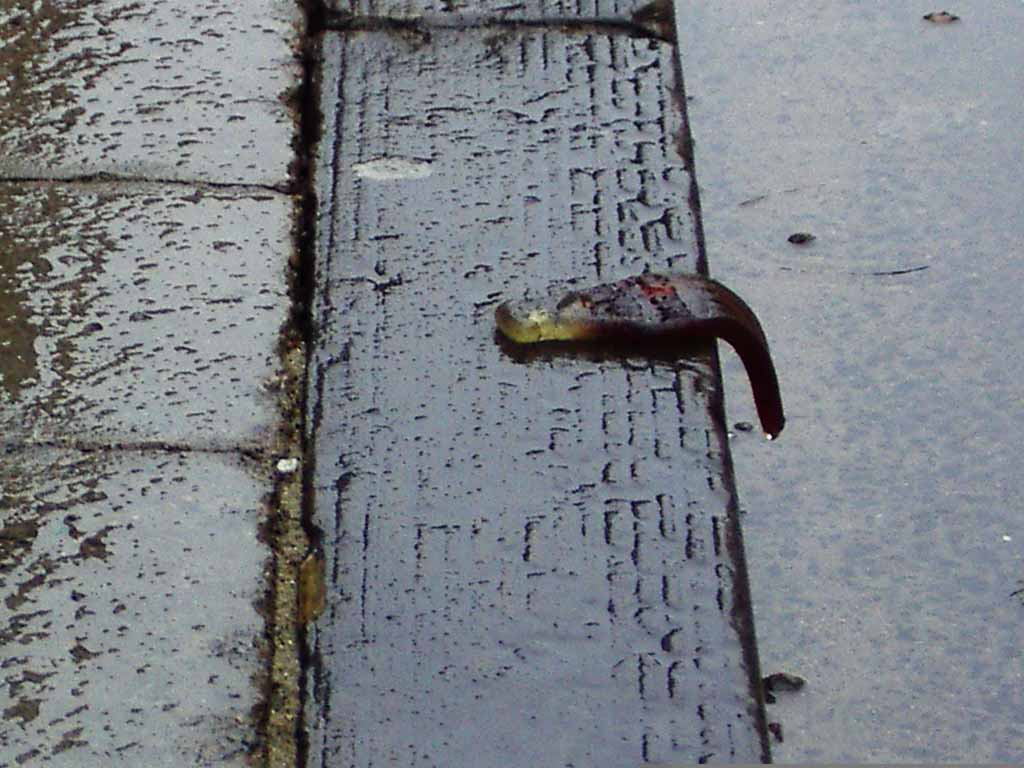 Photo of a cola bottle, drooping from the edge of a pavement. It's raining.